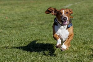 Learn to Petwork: Find Pet Groups in San Diego