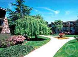 Apricot Pit - Sunnyvale