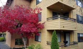 1 bedroom apartments for rent in west seattle seattle washington
