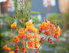 Enjoy the pretty flowers