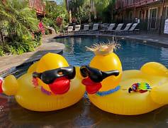 Pool, Galleria Oaks Apartments, 0
