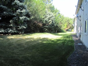 48 Borah ext rear yard IMG_8942.jpg