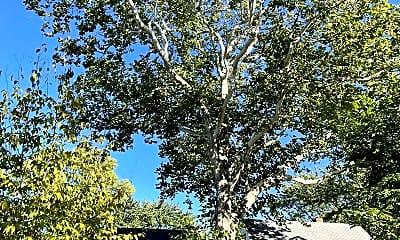tree.jpg, 2805 Edgewood Ave S, 2