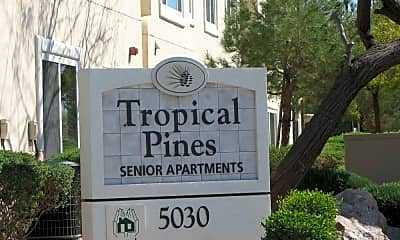 Tropical Pines, 2