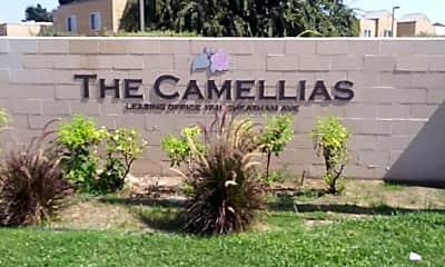 The Camellias, 1