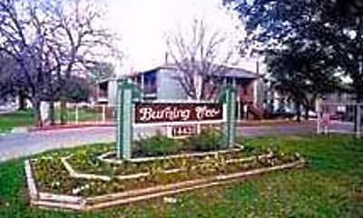 Burning Tree, 0