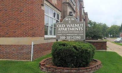 Old Walnut, 1