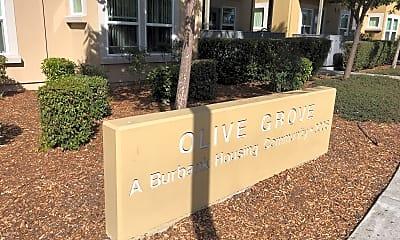 Olive Grove, 1