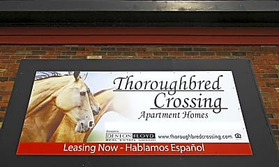 Thoroughbred Crossing, 2