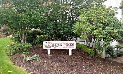 Golden Pines, 1