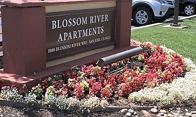 Blossom River, 1