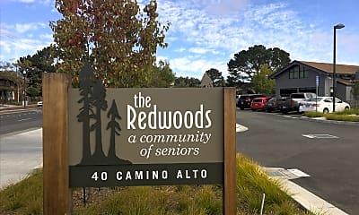 Redwoods, 1