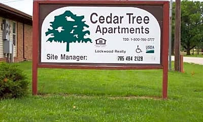 Cedar Tree, 0