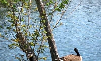 Shannon Lake, 2
