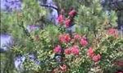 Landscaping, Woodoak, 2