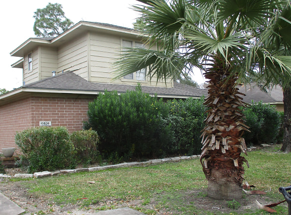 nice palm trees in front yard and pines in back yard