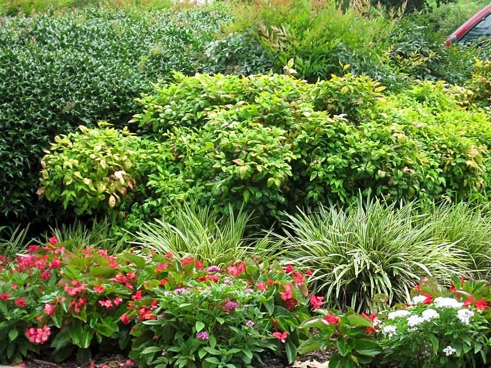 Immaculate Landscaping!!!