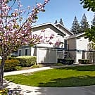 Clayton Creek - Concord, CA 94521