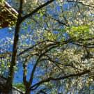 Hidden Ridge Apartments - Knoxville, TN 37920