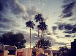 The Woods - Tucson