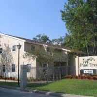 Pine Tree - Tampa, FL 33614