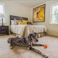 Brandon Point Apartments - Roanoke, VA 24018