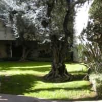 Encino Voltaire - Encino, CA 91316