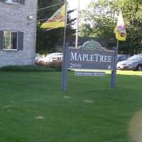 Maple Tree - Ripon, WI 54971