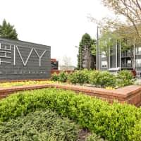 Ivy at Buckhead - Atlanta, GA 30324