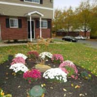 Dewberry Gardens - Waterbury, CT 06705