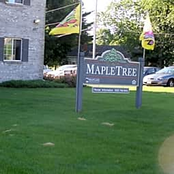 Maple Tree - Ripon, Wisconsin 54971