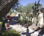 Plum Tree, Catalina Foothills, AZ