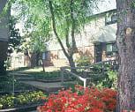 Plum Tree, Wooddale Middle School, Memphis, TN