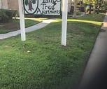 Mango Tree, Fontana A B Miller High School, Fontana, CA