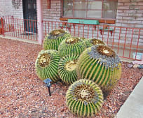 407 S Vista Del Rio, Green Valley, AZ