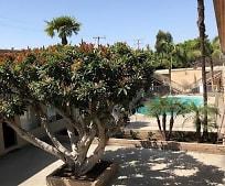 Pool, 9781 Acacia Ave