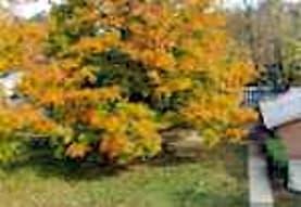 Rock Creek Woods, Rockville, MD