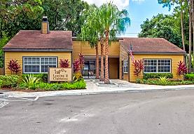 Pine Tree, Tampa, FL
