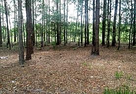 Country Club Woods, Starke, FL