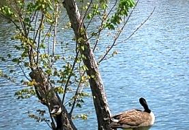 Shannon Lake, Union City, GA
