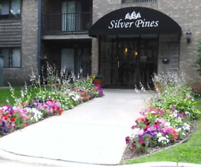 Main Image, Silver Pines