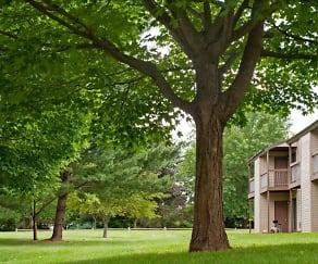 Building, Treetops