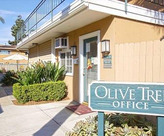 Olive Tree, Mariners, Newport Beach, CA