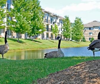 Prairie Lakes Apartments, Oakbrook, Peoria, IL