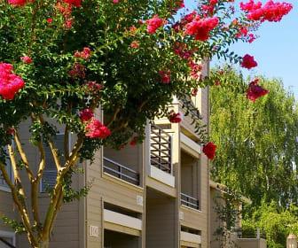 Arcadian Apartments, Ygnacio Valley Christian School, Concord, CA