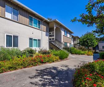 Olivewood, 94085, CA