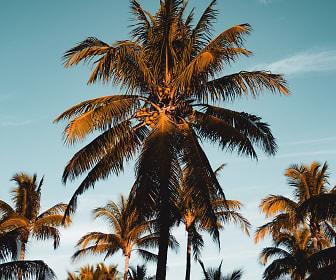 The Palm on SPID, Corpus Christi, TX